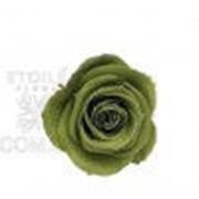 Роза Стандарт 6гол. зеленый чай фото
