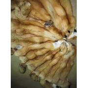 Шкуры рыжей лисы фото