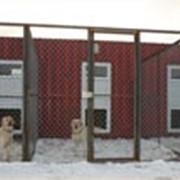 Зоогостиницы, Гостиница для собак. фото