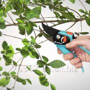 Обрезка кустарников и деревьев фото