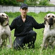 Консультация и обучение дрессировки собак фото