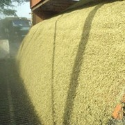 Организация приемки зерновых культур фото