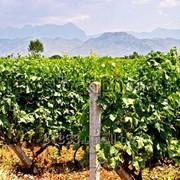 Столб виноградный, опорный, усиленный фото