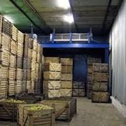 Сдача в аренду Фрукто-Овощехранилище, Холодильных помещений фото