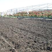 Продам фермерское хозяйство. фото