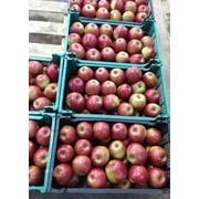 Мойка, сортировка яблок фото