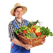 Услуги садовника в Минске (Беларусь) фото