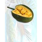 ДЖЕКФРУТ (хлебное дерево) Jackfruit, импортная продукция ОПТОМ фото