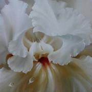 Картина маслом 18 орхидея 75х55 фото