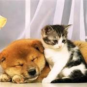 Лечение домашних животных жидким кордицепсом и жидким кальцием феникс fohow эффективно фото