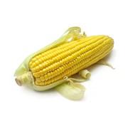 Насіння кукурудзи ЕС ПАРОЛІ фото