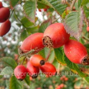 Плоды шиповника и боярышника сушеные(selling dried rose hips,dogberry)