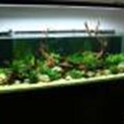 Пресноводный аквариум фото