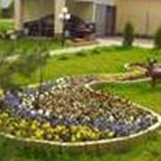Подкормка цветников фото