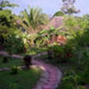 Зеленый туризм фото