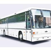 Перевозки по Беларуси автобусами МАЗ-152 фото