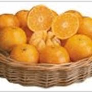 Апельсины, мандарины. фото