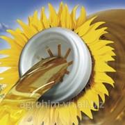 Насіння соняшника Сингента NK BRIO CRUISER укр, пак фото