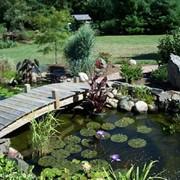 Дизайн и обустройство ландшафтных прудов, водоемов, ручьев, фонтанов фото