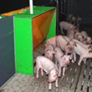 Автоматы кормления на 6 мест. для свиней фото