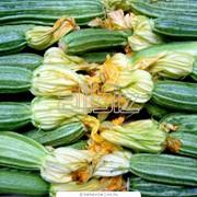 Семена кабачков Кавили F1 фото