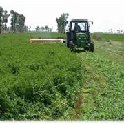 Семена кормовых трав фото