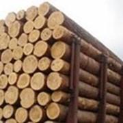 Сваи деревянные фото