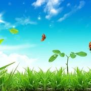 Семинар-тренинг Здоровая жизнь своими руками, Сергея Мищука (3-4.11.12) фото