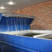 Разведение и выращивание пресноводной рыбы фото