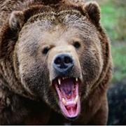 Охота на гигантского медведя фото