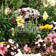 Прополка вручную цветников и альпинариев фото
