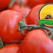 Помидоры Султан Bukhara Agro Export фото