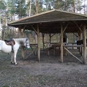 Конный пикник, аренда лошадей на праздник и корпоратив фото