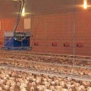 Оборудование для выращивания птицы, оборудование для откорма бройлеров фото