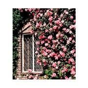 Чехол для плетистых и штамбовых роз, арт. 252220 фото