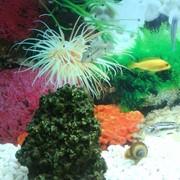 Ремонт крупногабаритных стеклянных аквариумов фото