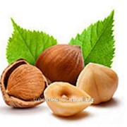 Орехи фундук фото