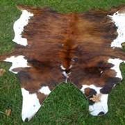 Шкуры крупного рогатого скота фото
