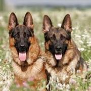 Терапия животных фото