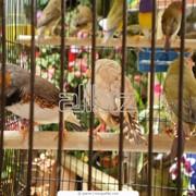Клетки для животных Клетки для ловли животных фото