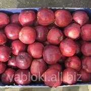 Продам Яблоки Рихард из Молдавии фото