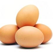 Яйцо куриное столовое фото