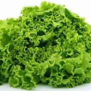 Семена салат кочанный Берлинский желтый импортный 1 кг фото
