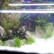 Уход за аквариумом фото