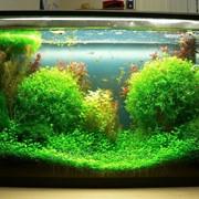 Обслуживание пресноводных аквариумов фото
