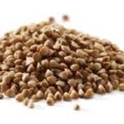 Переработка зерна гречихи Винница фото