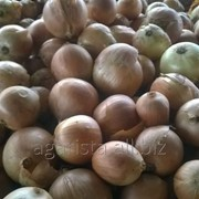 Лук (Ceapa) (из семян) . Продукт находится в р.Орхей. фото