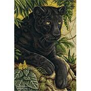 Черный бархат джунглей фото