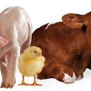 Консультации по оптимизации рационов кормления КРС, свиней и сельскохозяйственной птицы фото