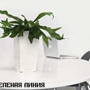 Maxi Cubico Не дарите просто цветы - удивляйте произведением искусства. Теперь CUBICO доступен и в качестве настольных горшков высотой 15 см. Срезанные цветы обычно быстро вянут и теряют свое красочное... фото